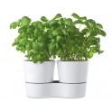 Double pot à herbes hydro
